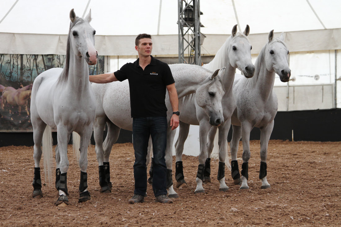 Cavalia horses at liberty with their trainer
