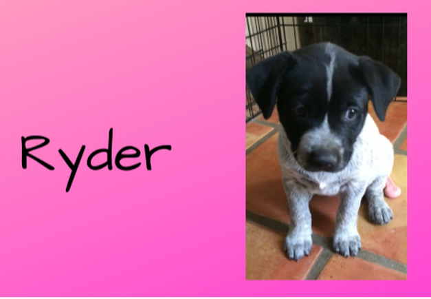 Carly Kade's Dog Ryder