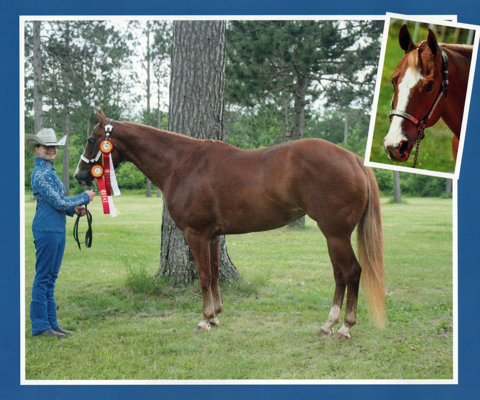 Diane Maccani and her childhood Quarter Horse